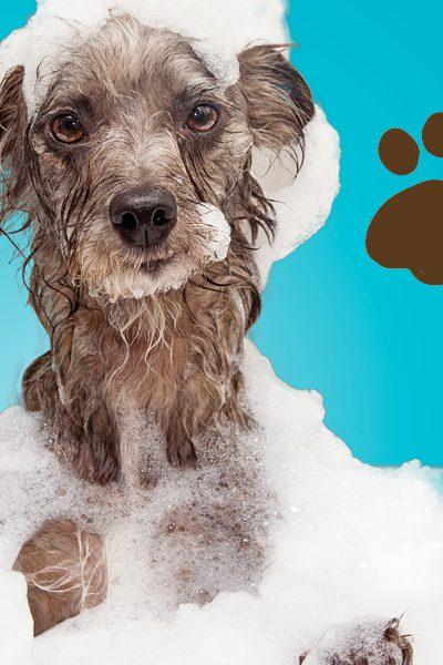 doggy wash web